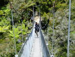 suspension bridge - Abel Tasman Park